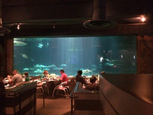 Restaurante Shark