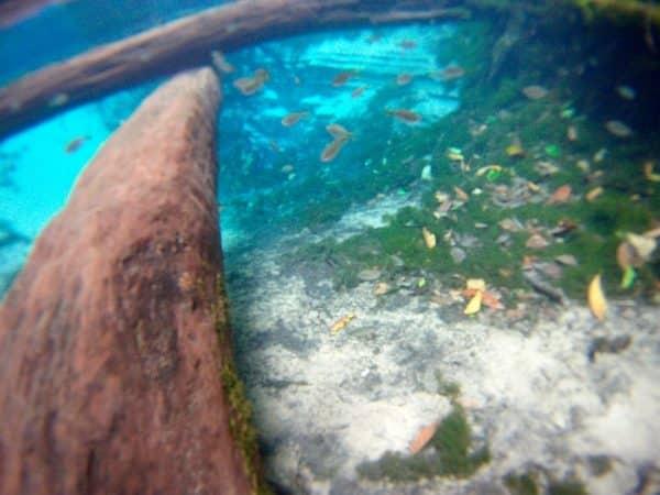 FullSizeRender (5) aquario