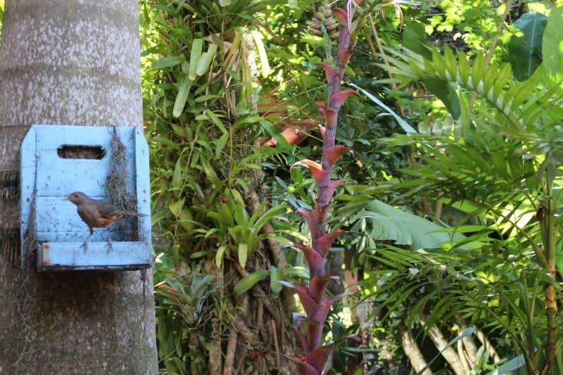 pousada riacho dos cambucás-ilhaGrande