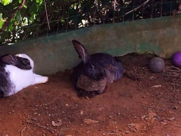 Que lindo...Tem até coelhinhos...