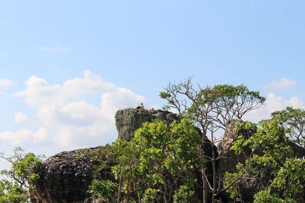 O Urubu rei esta no topo da pedra.