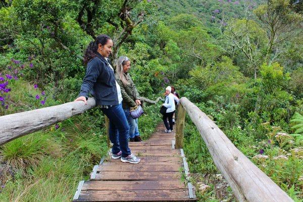 Monte Verde 03 -15 068