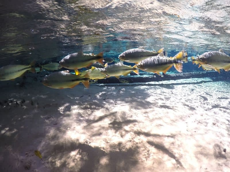 Cachoeira Serra Azul nobres