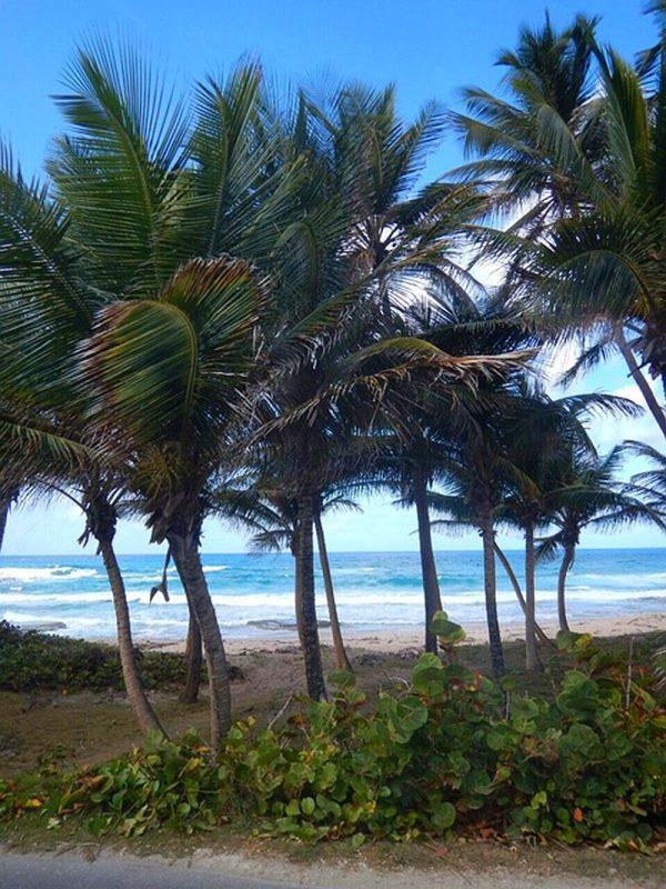 Guia de Barbados 119