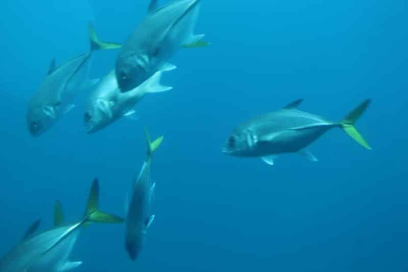 Atlantis Submarine Barbados 17