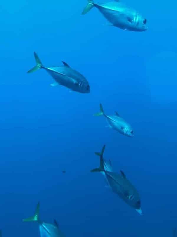 Atlantis Submarine Barbados 19