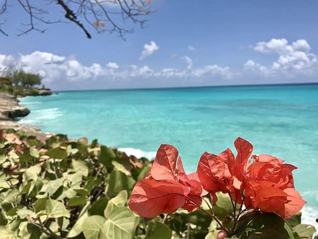 Williams Tour Barbados 19