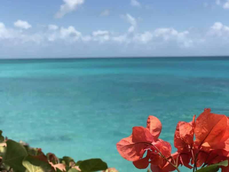 Williams Tour Barbados 5