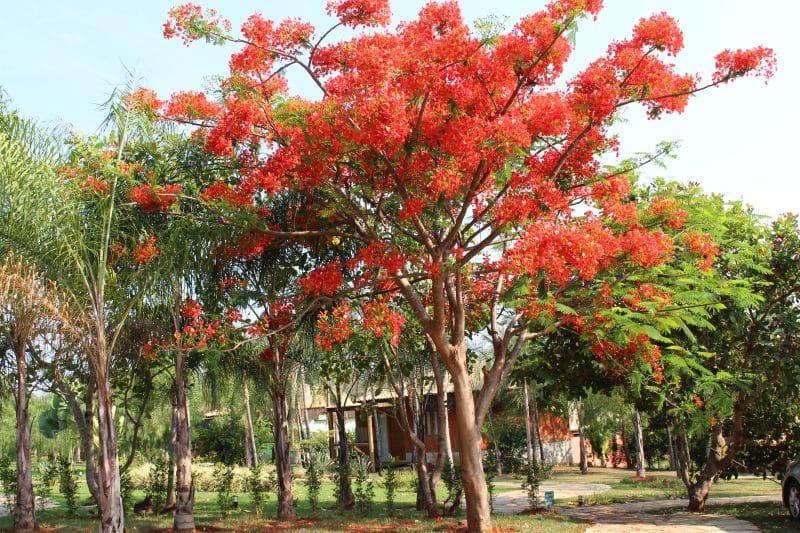 Villa do Comendador, Pousada em Pirenópolis 46