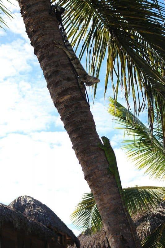 Pousada BGK em Barra Grande 9